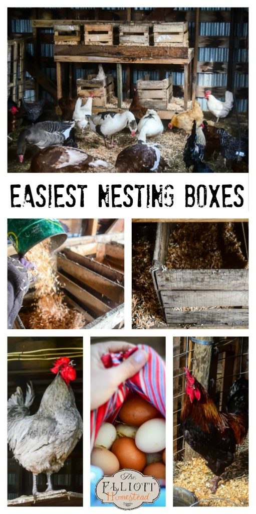 The Easiest Nesting Boxes EVER (and what we've learned about using the hard ones!) | The Elliott Homestead