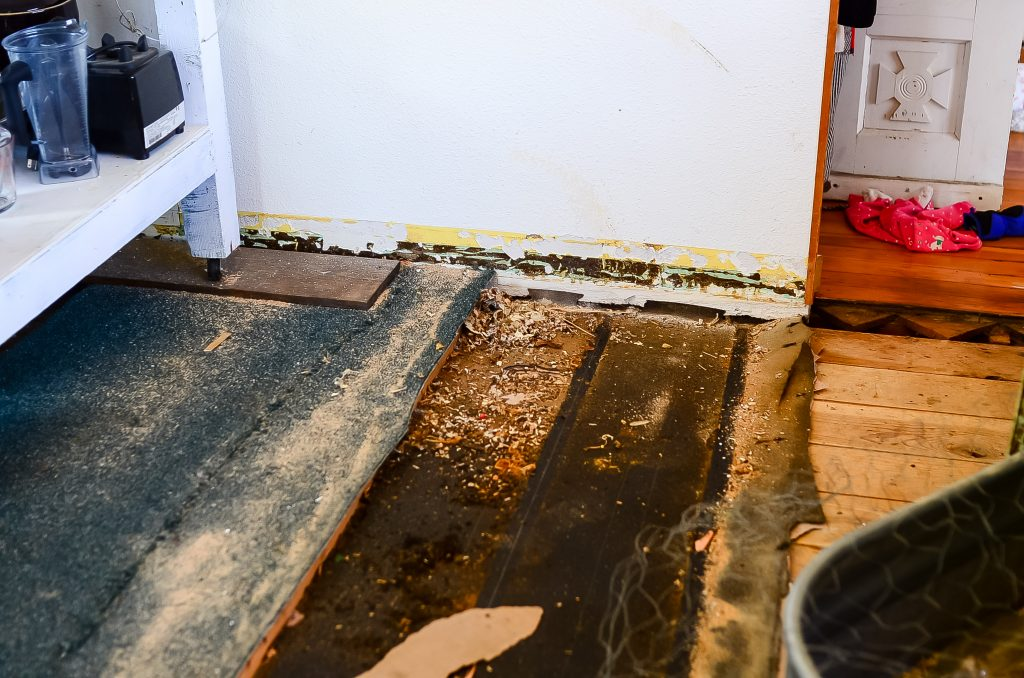 Old floor, mouse poo, new floor