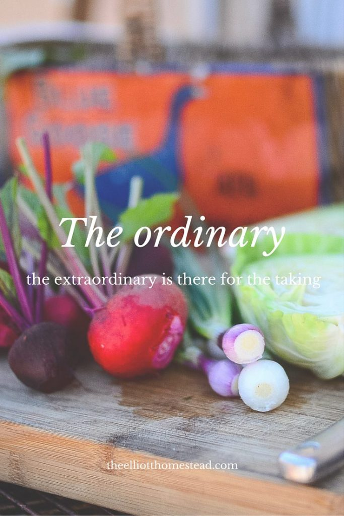 The ordinary: The extraordinary is there for the taking | theelliotthomestead.com