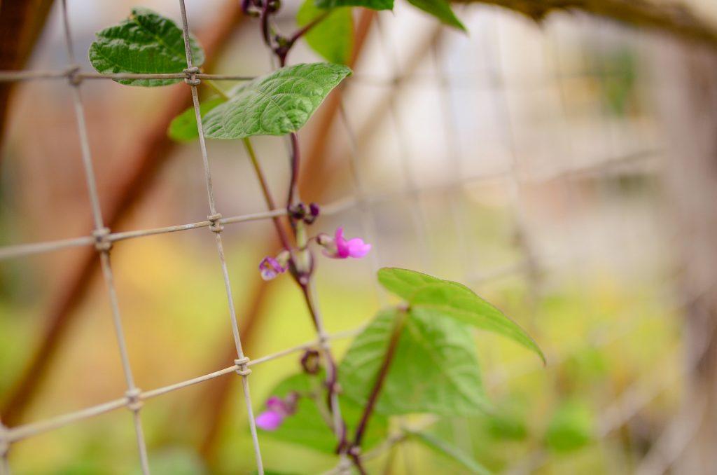 Farmhouse Cottage Garden fence