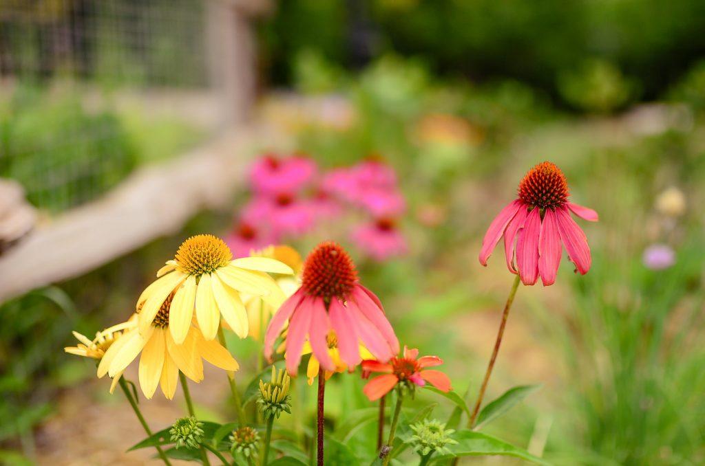 Farmhouse Cottage flowers
