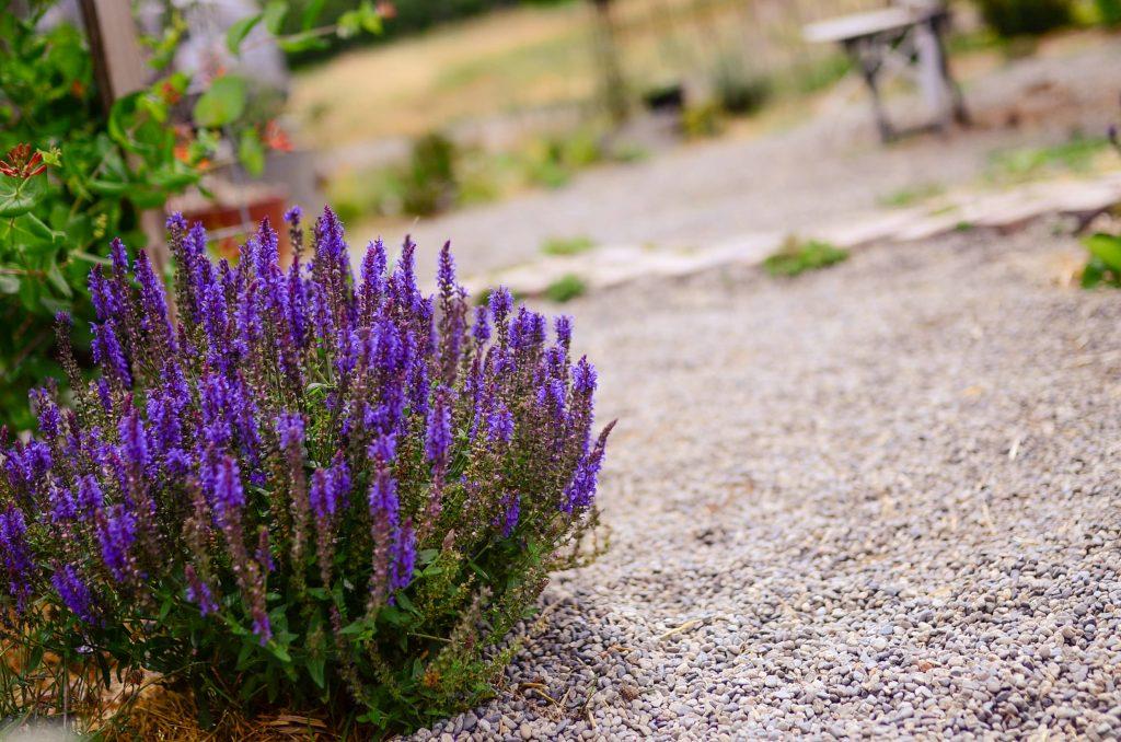 Farmhouse Cottage Lavender