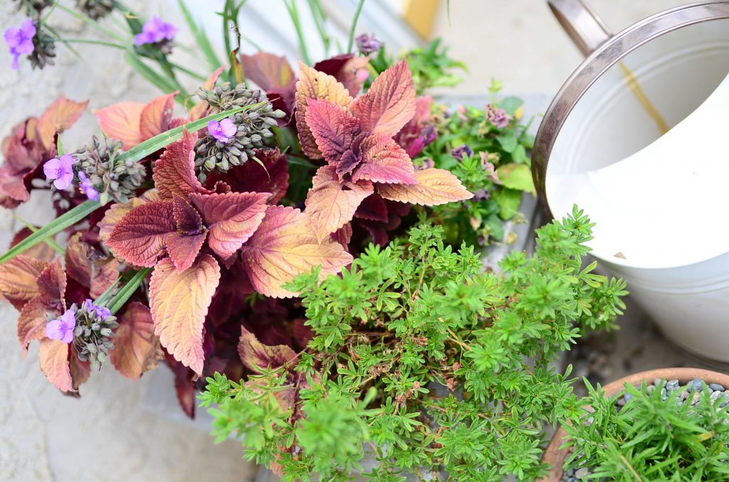 Farmhouse Cottage Potted plants
