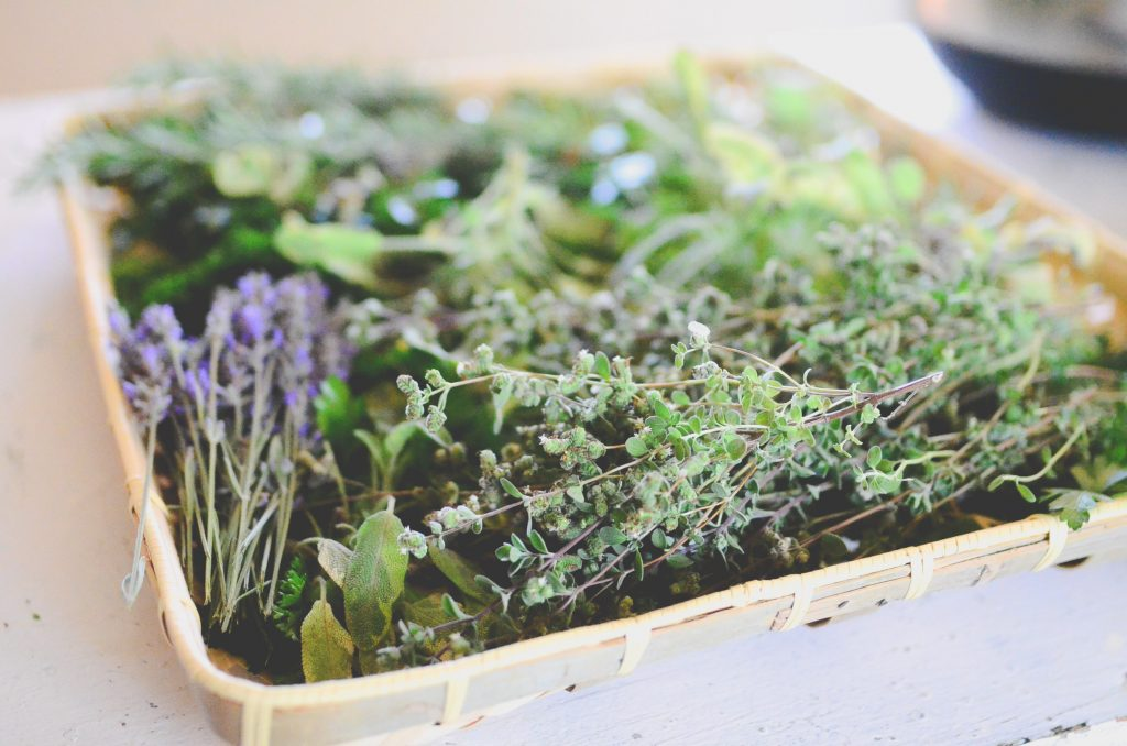 Herbs for winter drying
