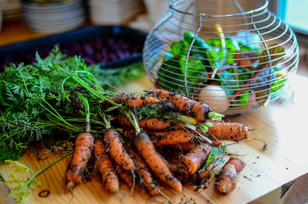 Fall harvest of carrots | The Elliott Homestead