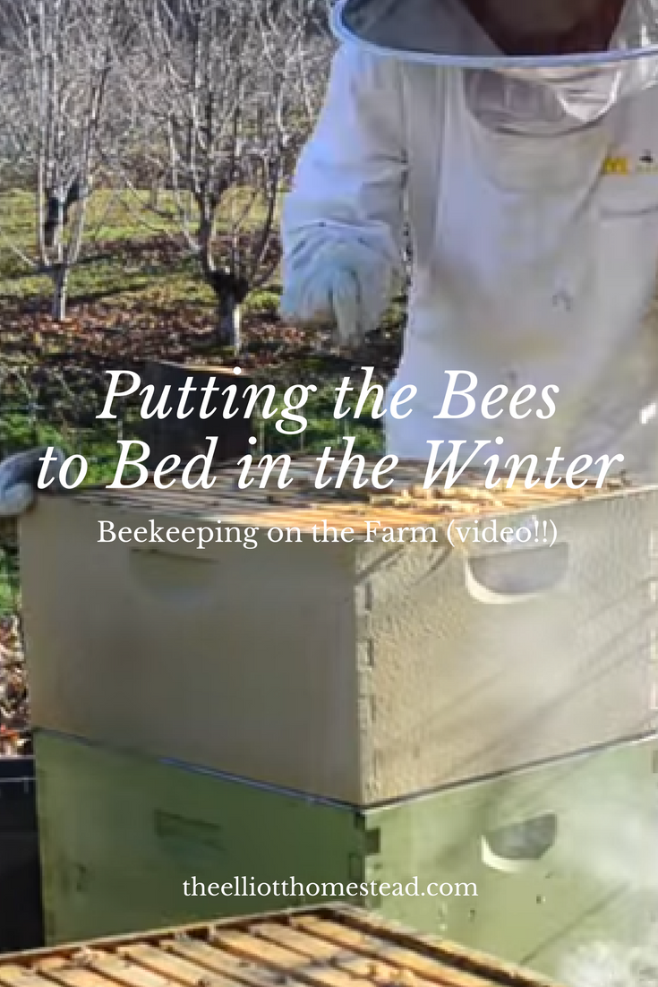 Putting the Bees to Bed in the Winter