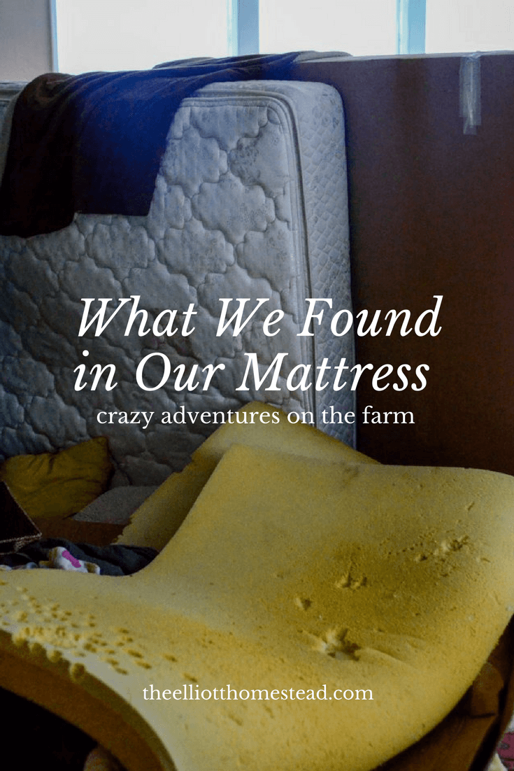 What We Found in Our Mattress | The Elliott Homestead