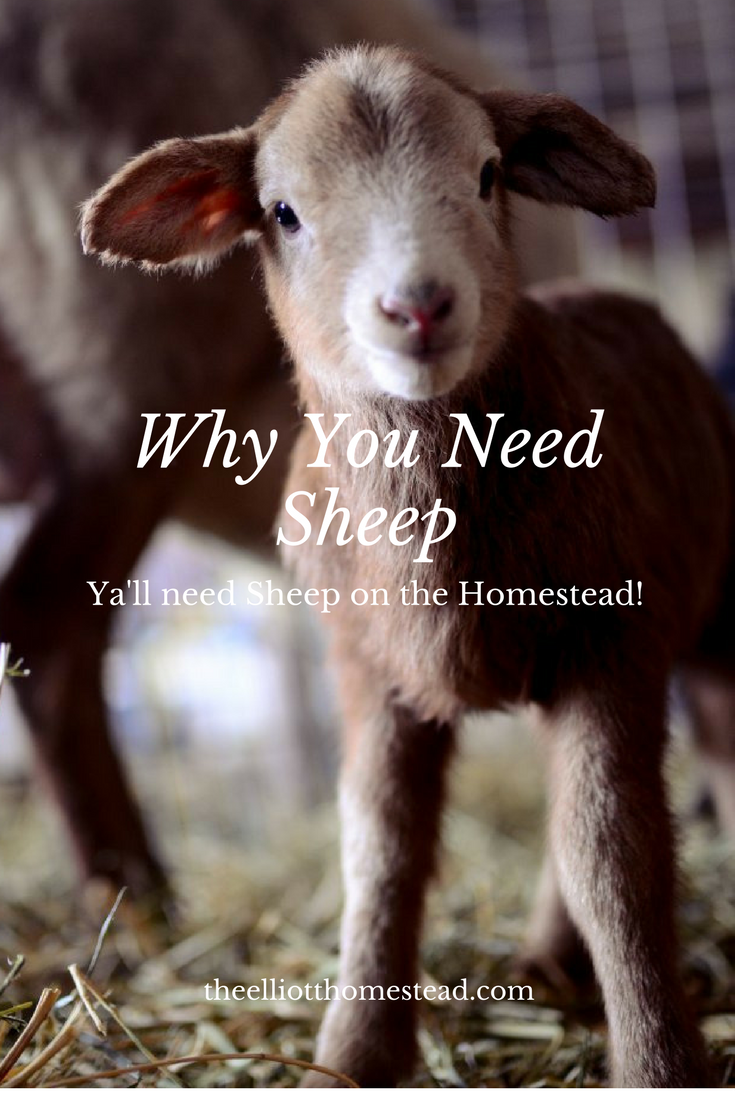 Why You Need Sheep