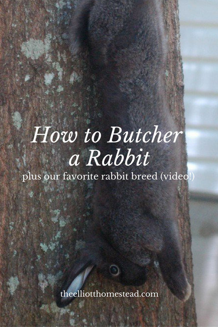 How to Butcher a Rabbit on the Farm (video)