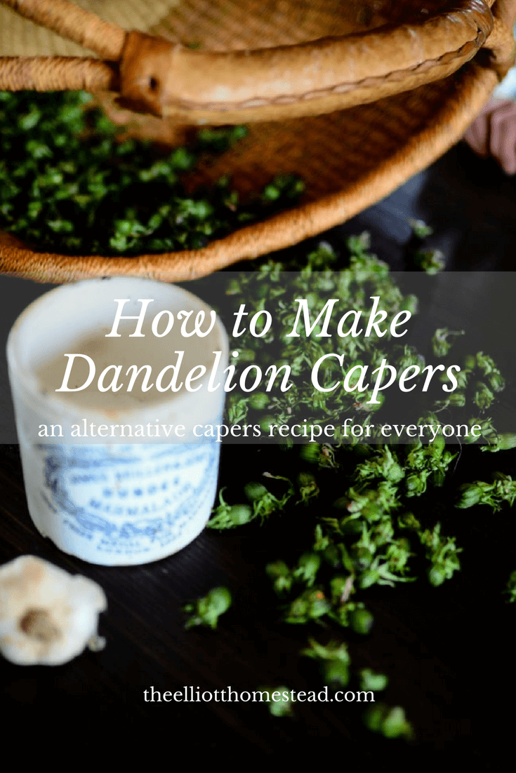 How to Make Dandelion Capers | The Elliott Homestead (.com)
