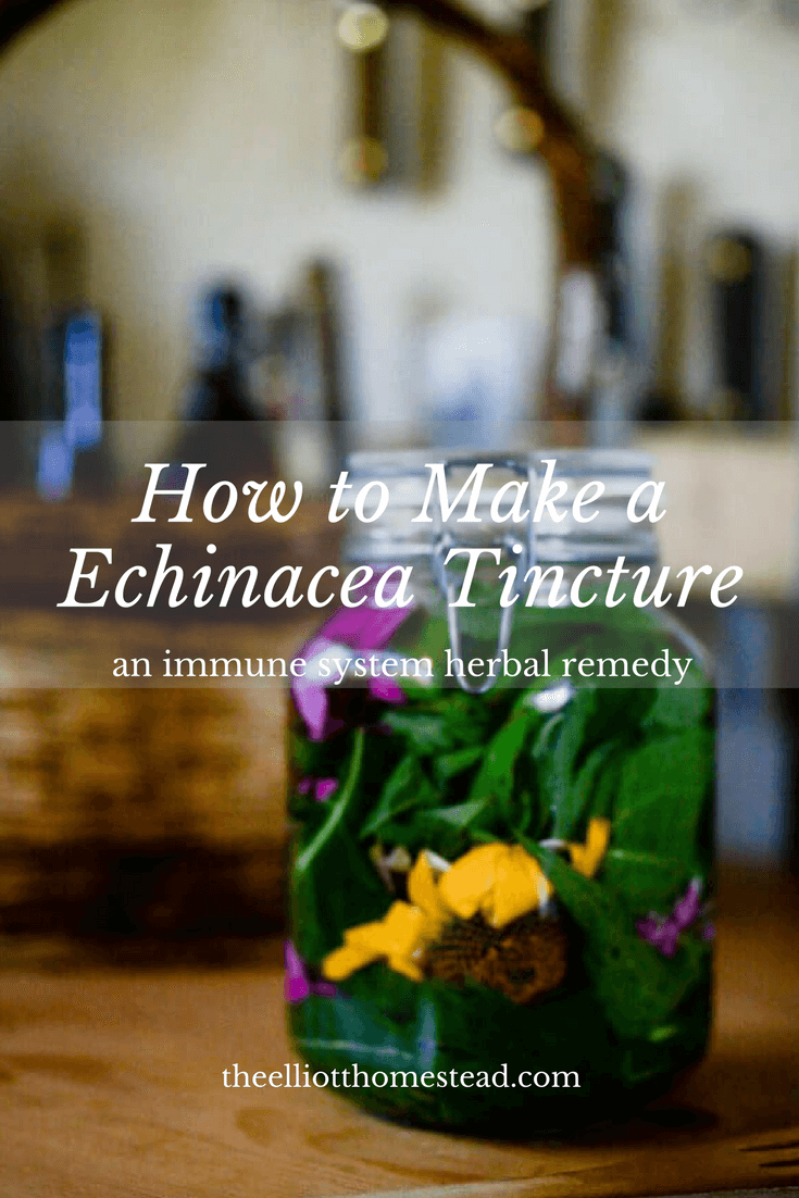 How to Make a Homemade Echinacea Tincture | The Elliott Homestead
