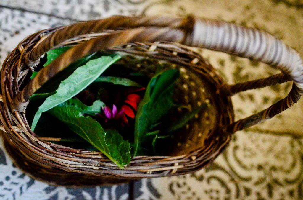 Homemade Echinacea Tincture