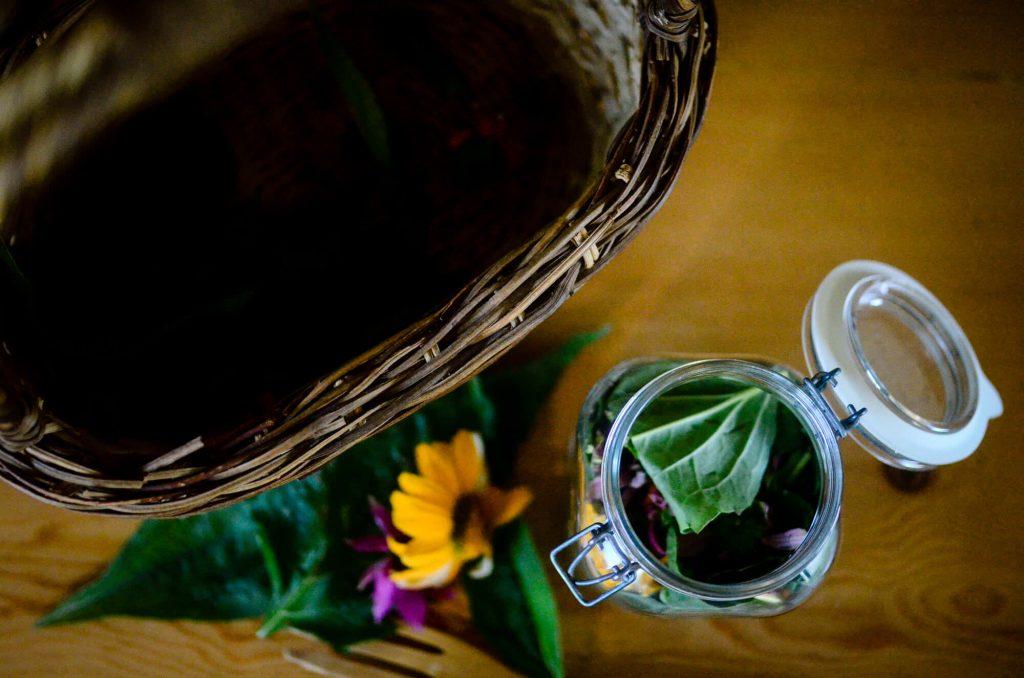 Echinacea leaves, petals, flowers, stems, and roots   The Elliott Homestead
