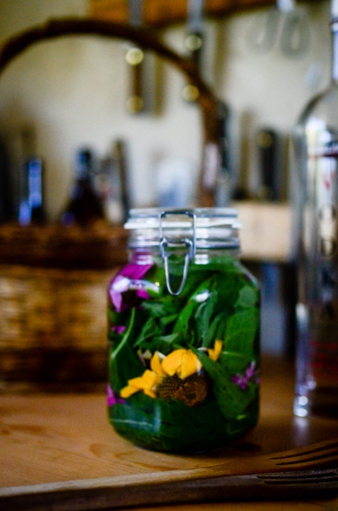 Echinacea Tincture | The Elliott Homestead