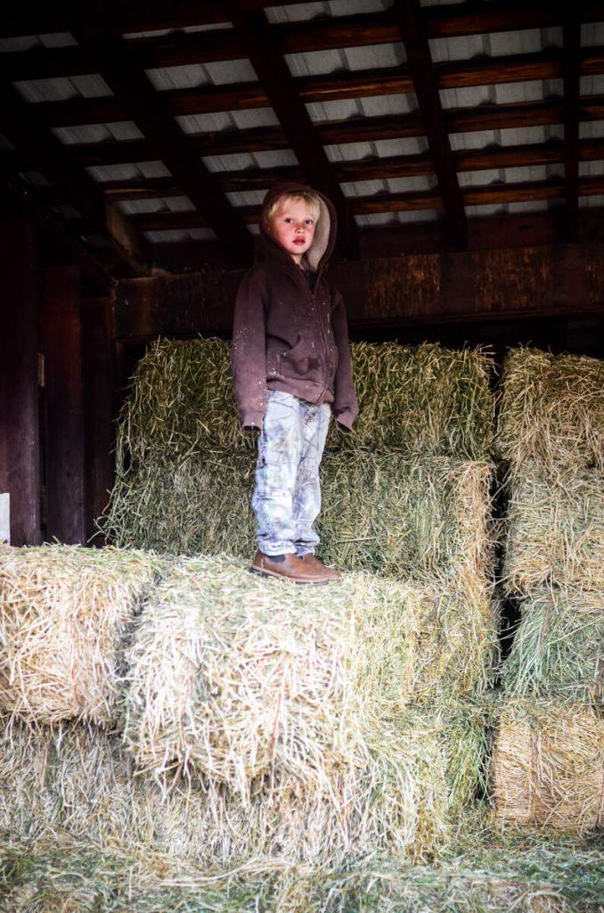 Farm help   The Elliott Homestead