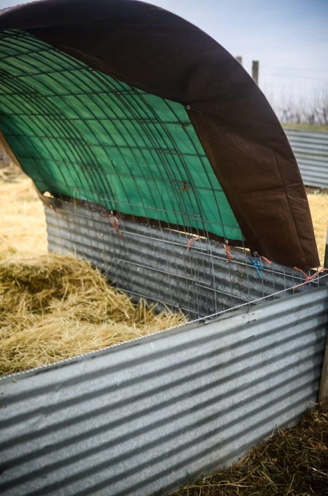 An easy pig shelter | The Elliott Homestead