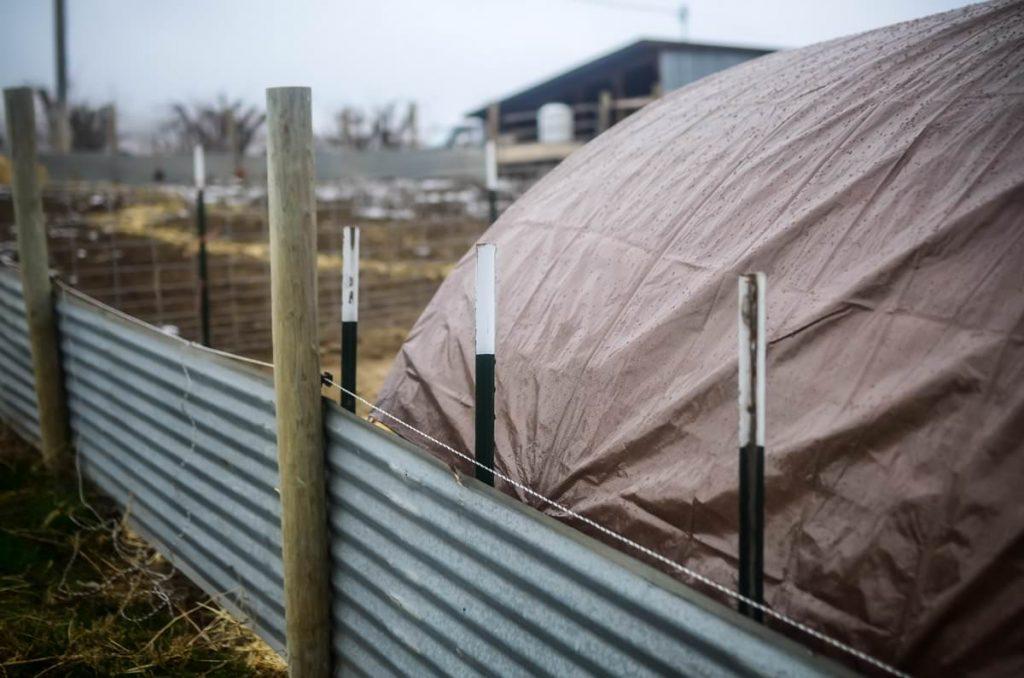 Securing a pig shelter | The Elliott Homestead