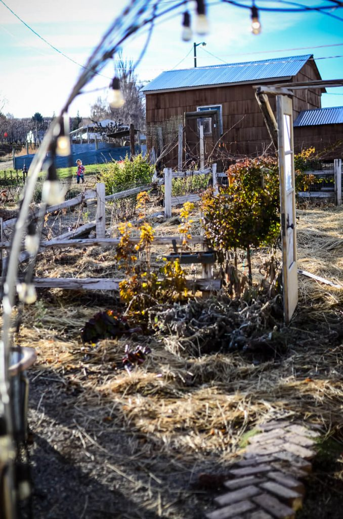 The potager in winter | The Elliott Homestead