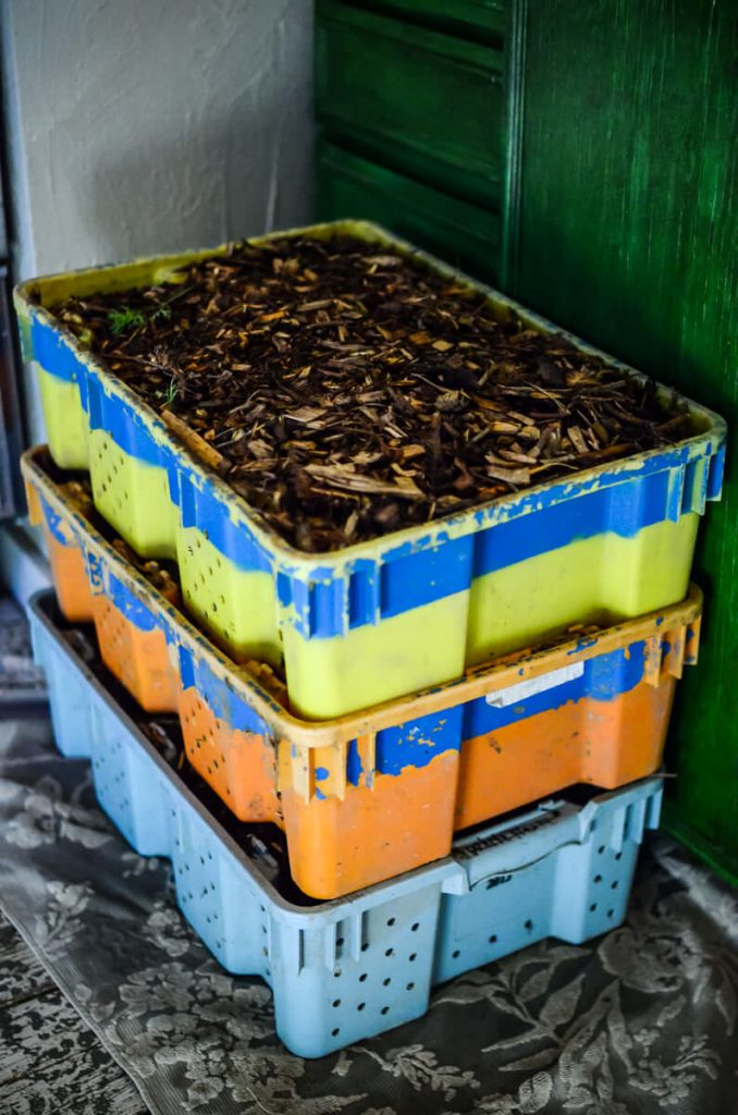 Bins of carrots for root cellar storage | The Elliott Homestead