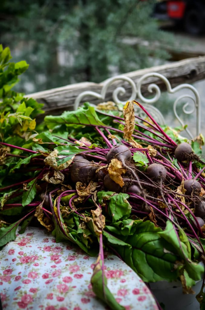 How to store beets | The Elliott Homestead