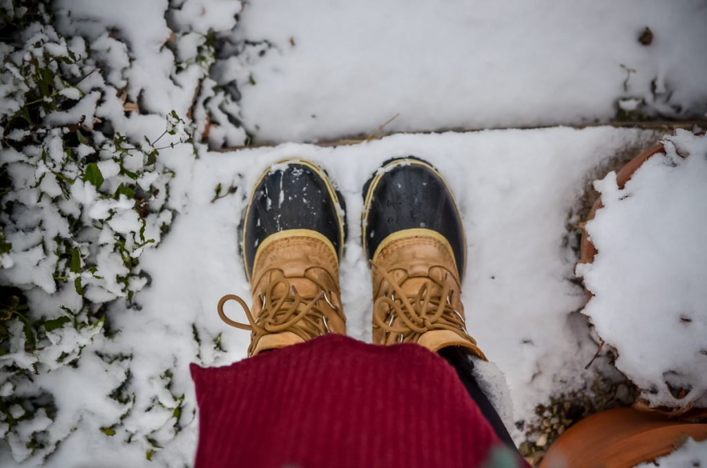 Thriving in Winter | The Elliott Homestead