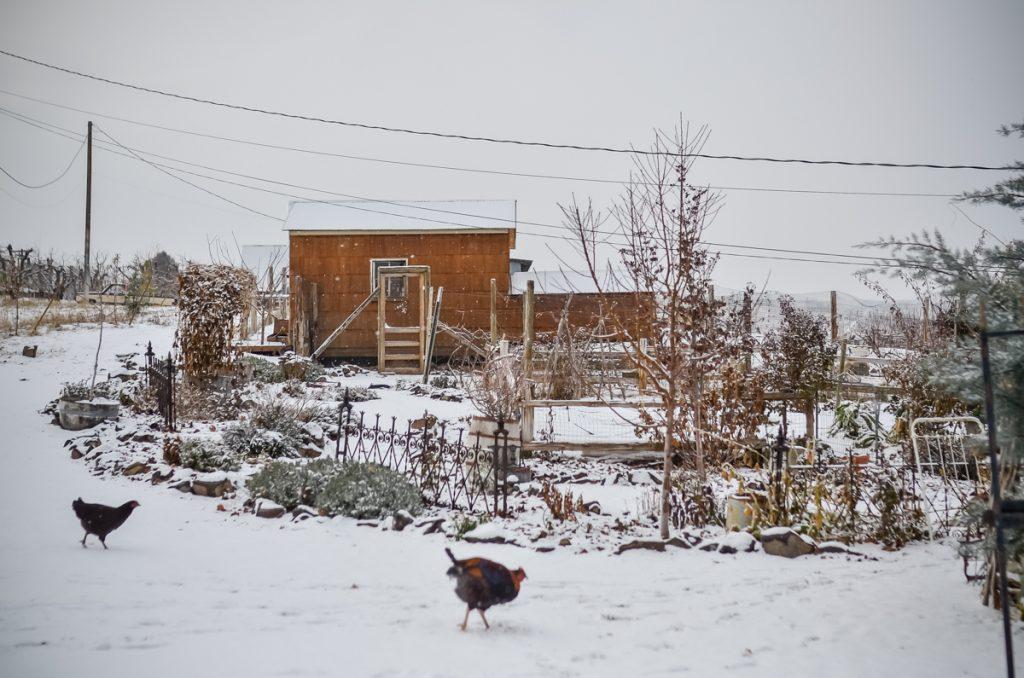 Chicken Coop in Winter | The Elliott Homestead