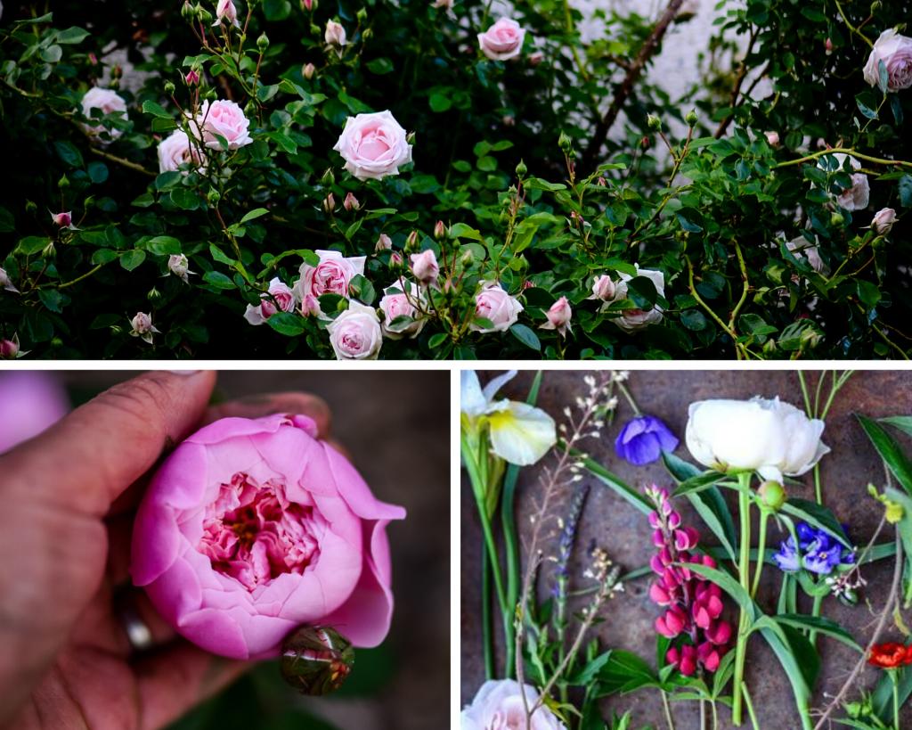 Beautiful David Austin English Roses to Plant | The Elliott Homestead