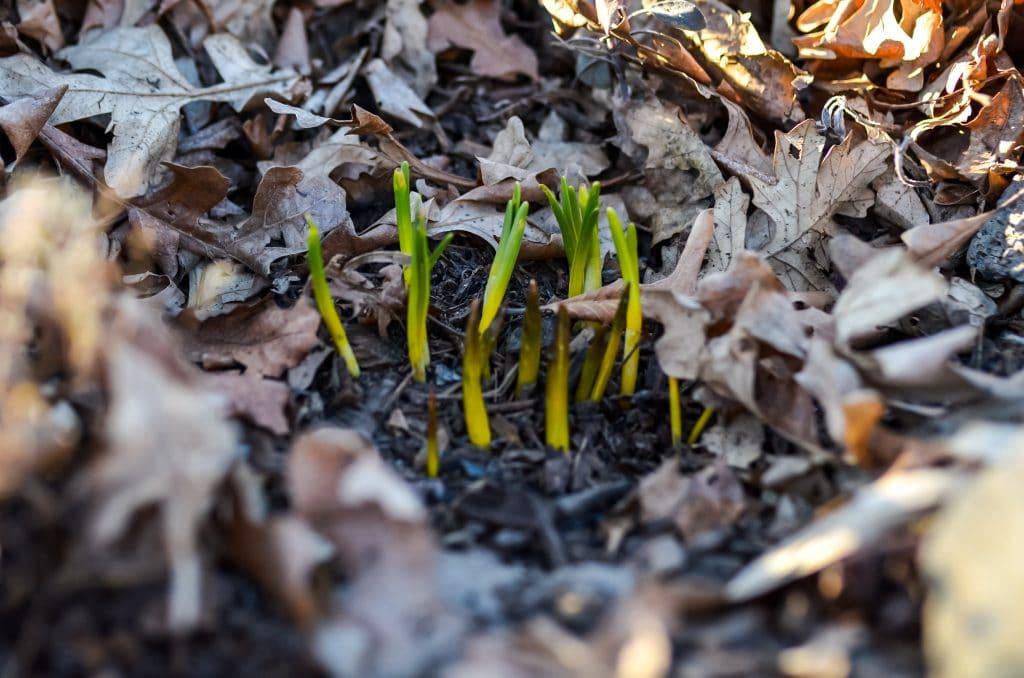 Spring Garden | The Elliott Homestead