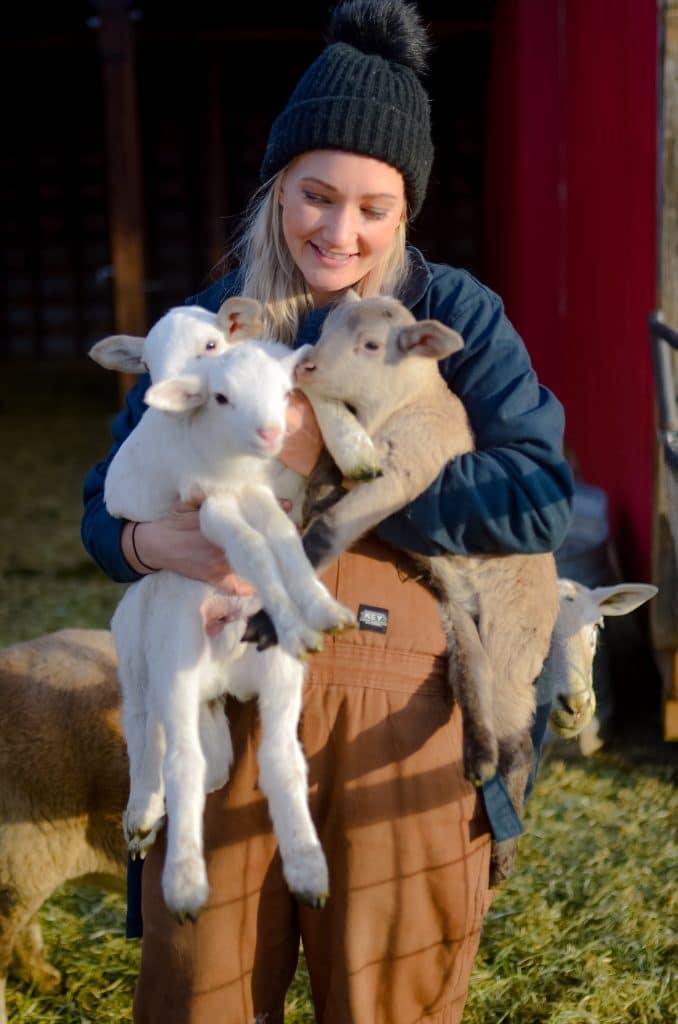 Triplet Lambs | The Elliott Homestead