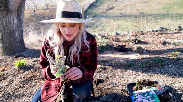 Cottage Gardening On A Budget | The Elliott Homestead