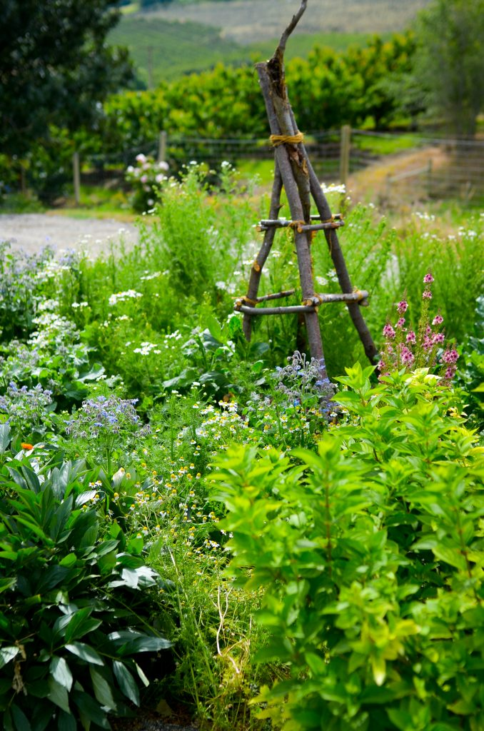 Cottage Garden | The Elliott Homestead (.com)