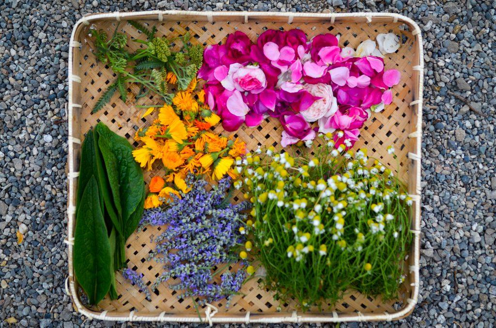 Outlander-inspired herbal salve | The Elliott Homestead (.com)