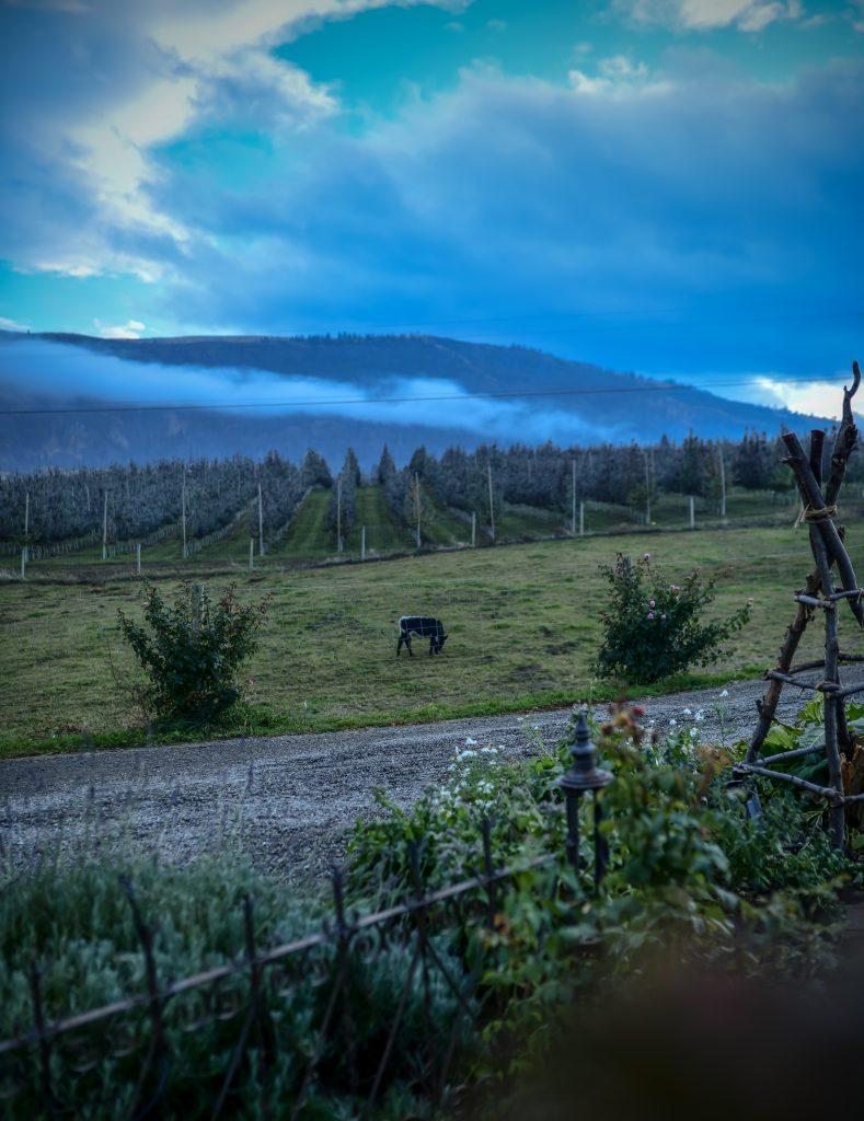 This ol' house | Farmhouse | The Elliott Homestead