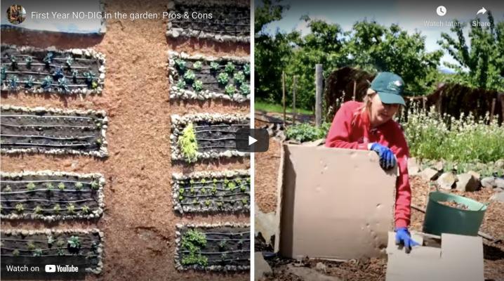 Pros & Cons of No-Dig Gardening | The Elliott Homestead