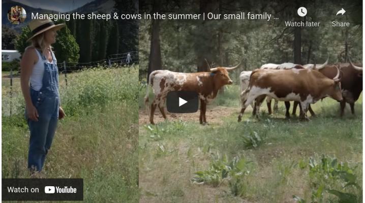 Managing farm animals in the summer | The Elliott Homestead (.com)