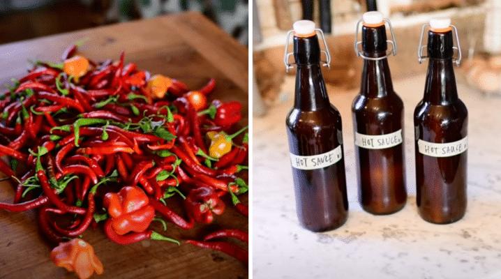 Easy Fermented Hot Sauce | The Elliott Homestead (.com)